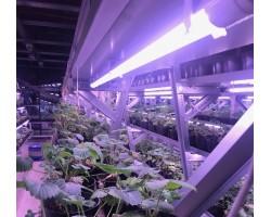 Фитосветильник Emy Light Original Plus полный спектр Т8 30Вт для теплиц
