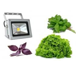 Фито прожектор EmyLight Plus биколор 10Вт  для выращивания рассады