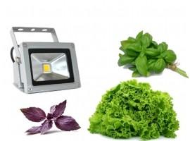 Фито прожектор Emy Light Plus биколор 10Вт  для выращивания рассады